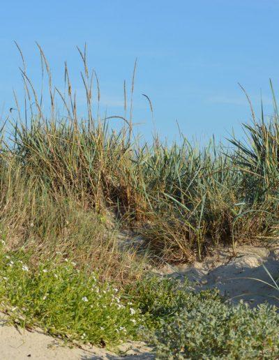 La dune entre terre et mer