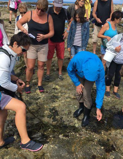 Les algues nouvelles saveurs marines