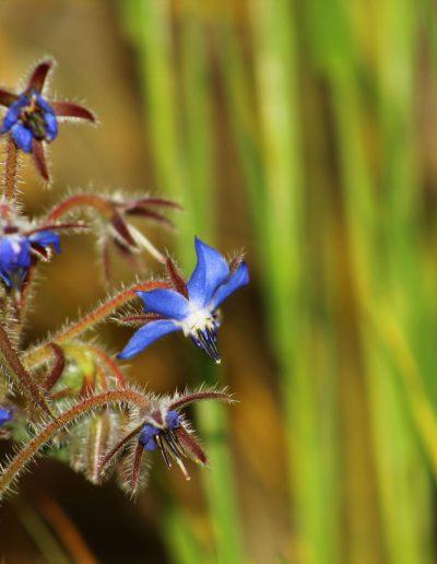 Les mille et une vertus des plantes sauvages