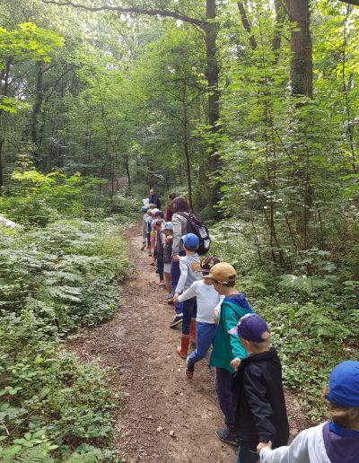 Mes premiers pas en forêt