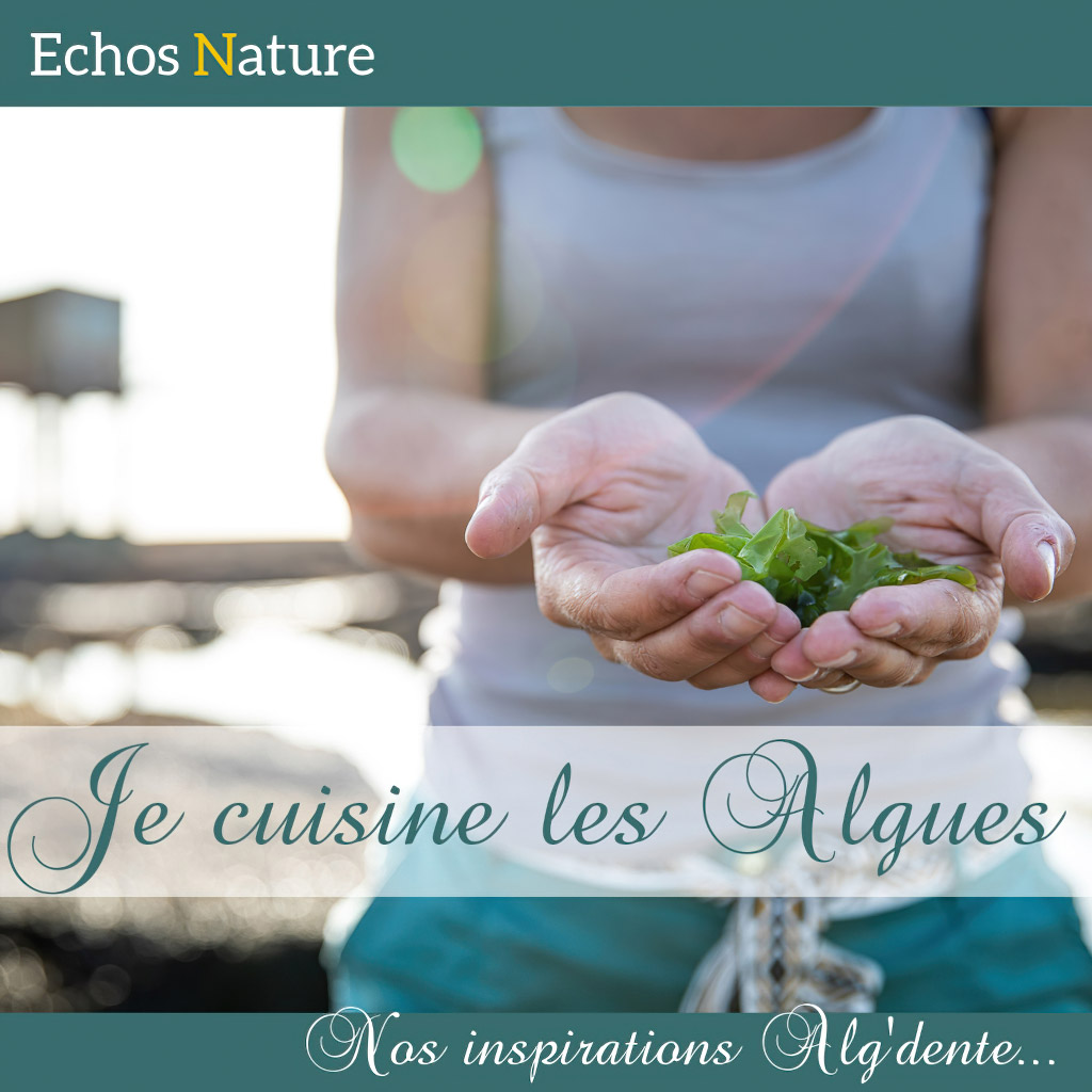 ebook je cuisine les algues